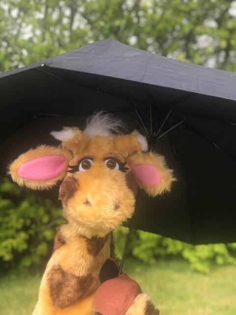 Harold rain