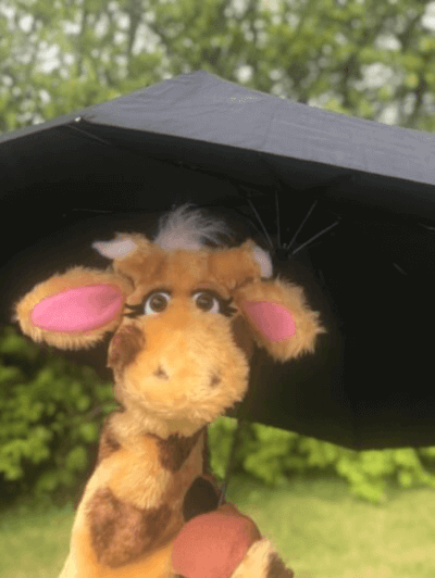 Harold under umbrella
