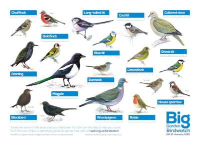 RSPB British garden birds' poster - in full colour.