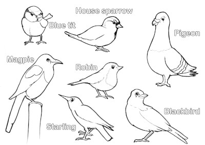 Black and white illustrations of garden birds, for colouring in.