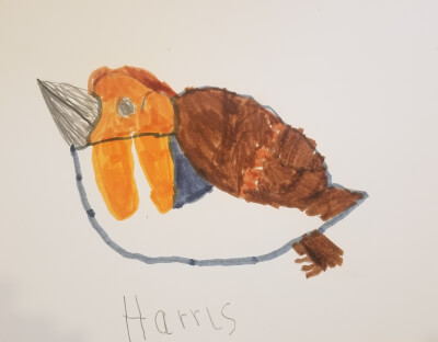 Drawing of a robin by a child from Aberdeenshire