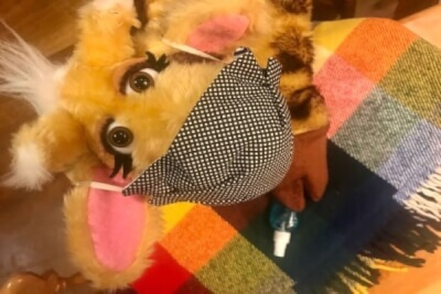 Photograph of Harold the giraffe wearing a face mask and with hand sanitizer and blanket