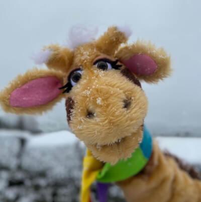 Harold in the snow